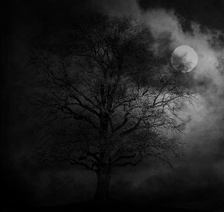 Night, Tree, Moon, Landscape, Moonlight, Gloomy, Dark