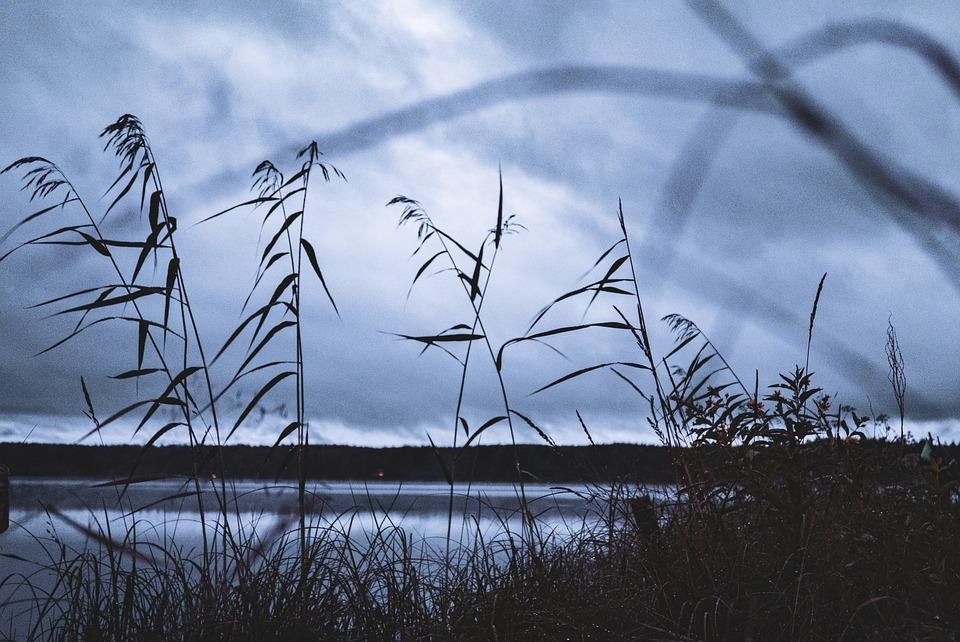 Hay, Reed, Rush, Bulrush, Club-rush, Lake, Night, Dark