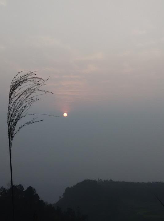 Sunset, Reed, The Scenery, Twilight, Dark, Rainy