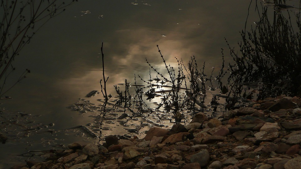 River, Water, Moon, Night, Moonlight, Calm, Dark