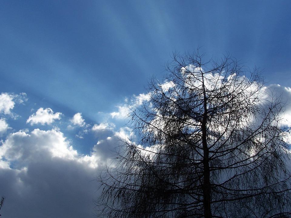 Sky, Clouds, Tree, Dark