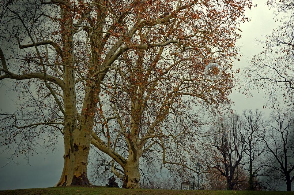 Deciduous Tree, Poplar, Tree, Autumn, Winter, Darkness