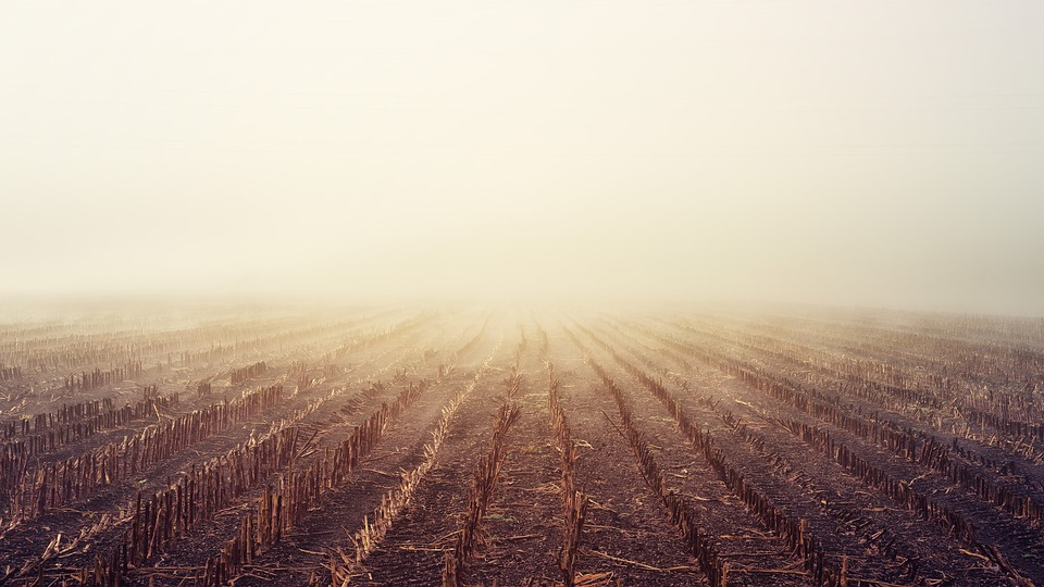 Dawn, Arable, Fog, Autumn, Landscape, Nature, Field