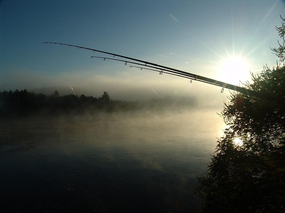 Fishing, Dawn, Island, Drava, Nature