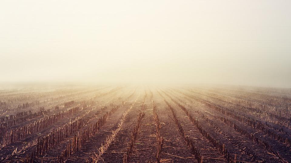 Dawn, Arable, Fog, Autumn, Landscape, Nature, Field