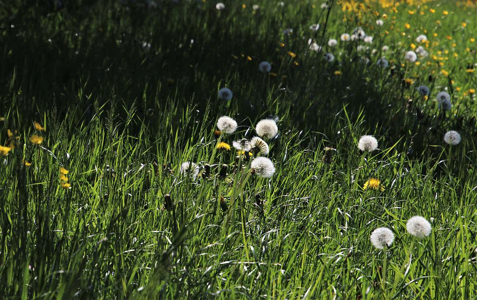 Green Meadow, Nuns, Light, Dawn, Grass, Shadow