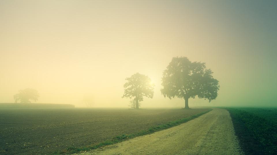 Dawn, Trees, Away, Fog, Landscape, Nature, Field