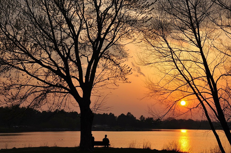 Tree, Landscape, Dawn, Nature, Wood