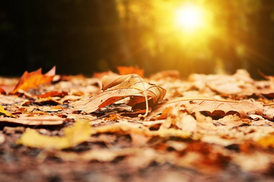 Autumn, Leaf, Leaves, Park, Light, Dawn, Sun, Rays