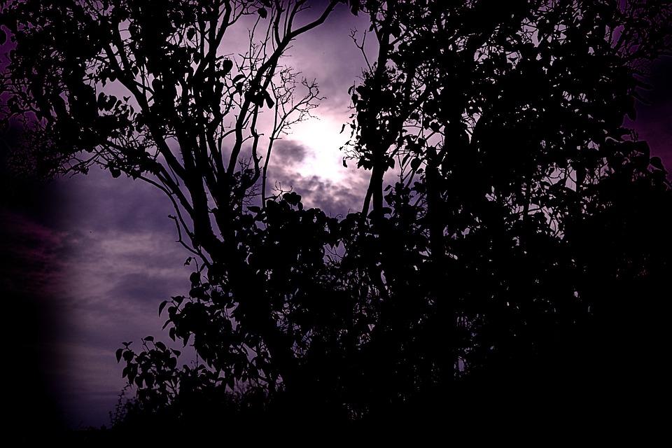 Tree, Nature, Dawn, Sun