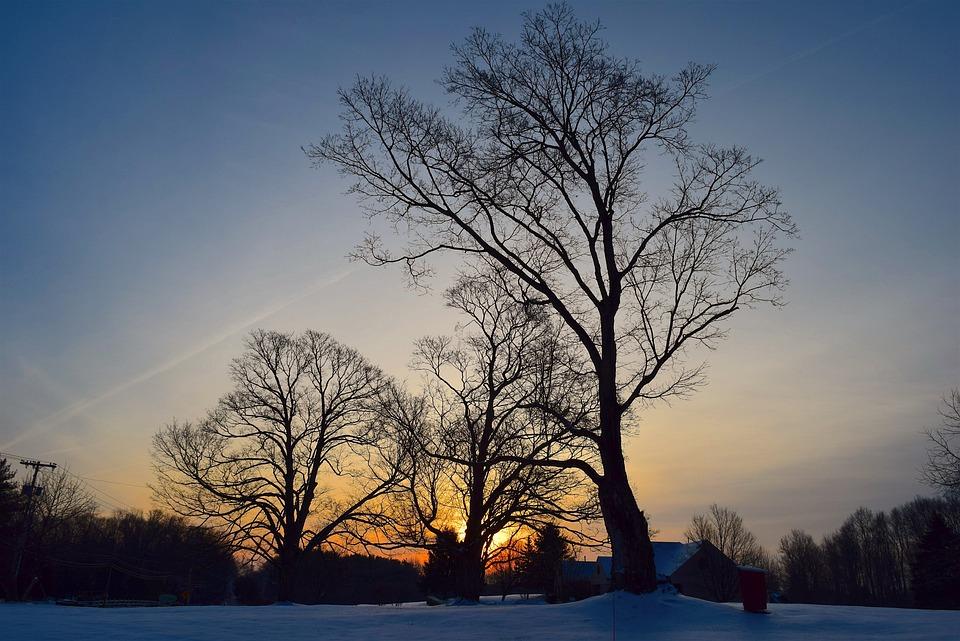 Trees, Dawn, Landscape, Winter, Nature, Sunrise, Wood