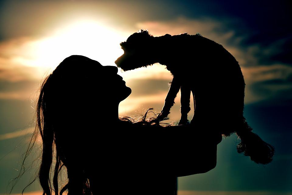 Sunset, With Backlight, Silhouette, Sun, Human, Dawn