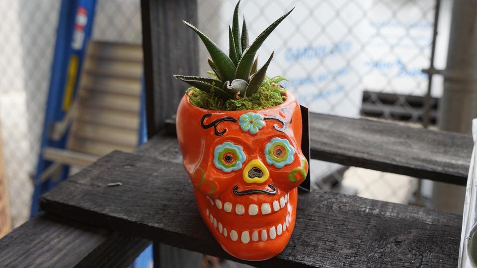 Halloween, Skull, Day Of The Dead, Succulent, Planter