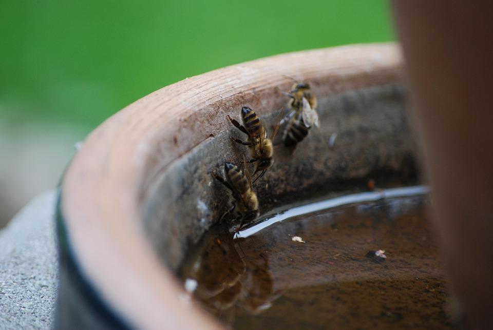 A, Evertebrat, Insect, Close, Daylight, Background