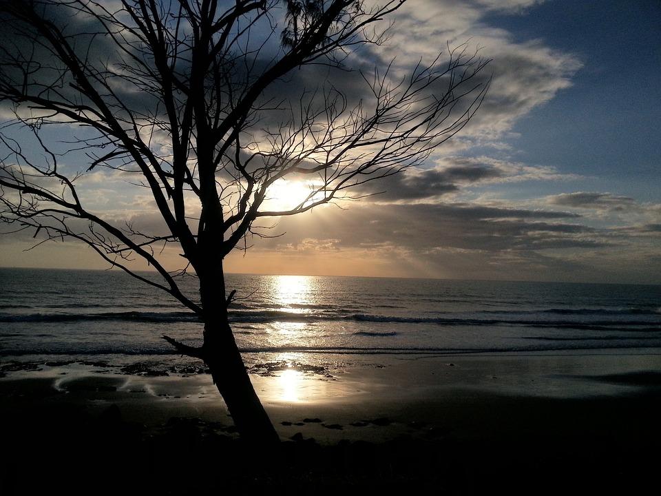 Sea, Water, Tree, Daylight, Sun, Ocean, Boat, Clouds