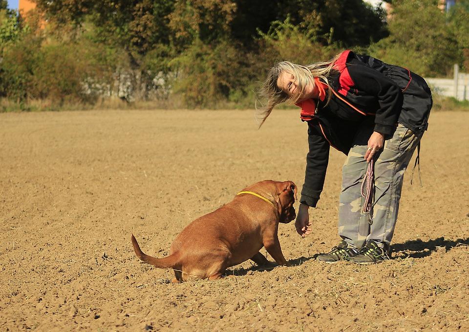 Bordeaux, De, Mastiff, Dog, Mastiffs, Animal, French
