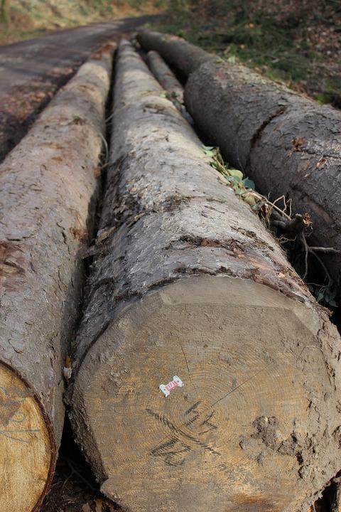 Tree, Log, Bark, Nature, Tribe, Wood, Dead Tree