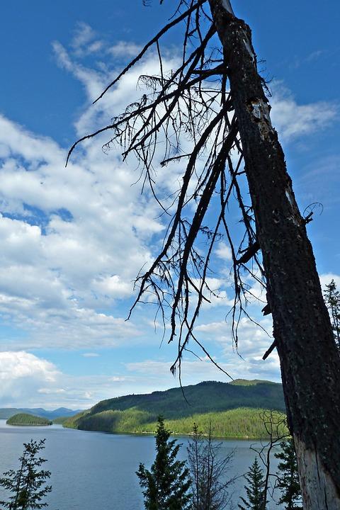 Canim Lake, British Columbia, Canada, Dead Tree