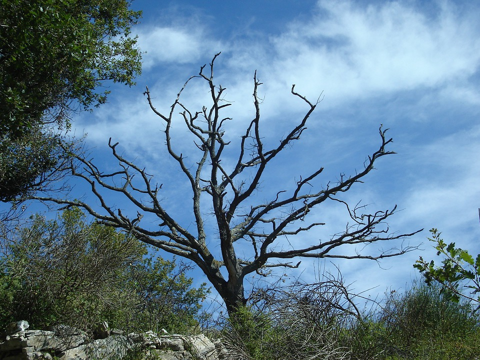 Tree, Dead Plant, Dead, Nature, Sky, Black, Blue
