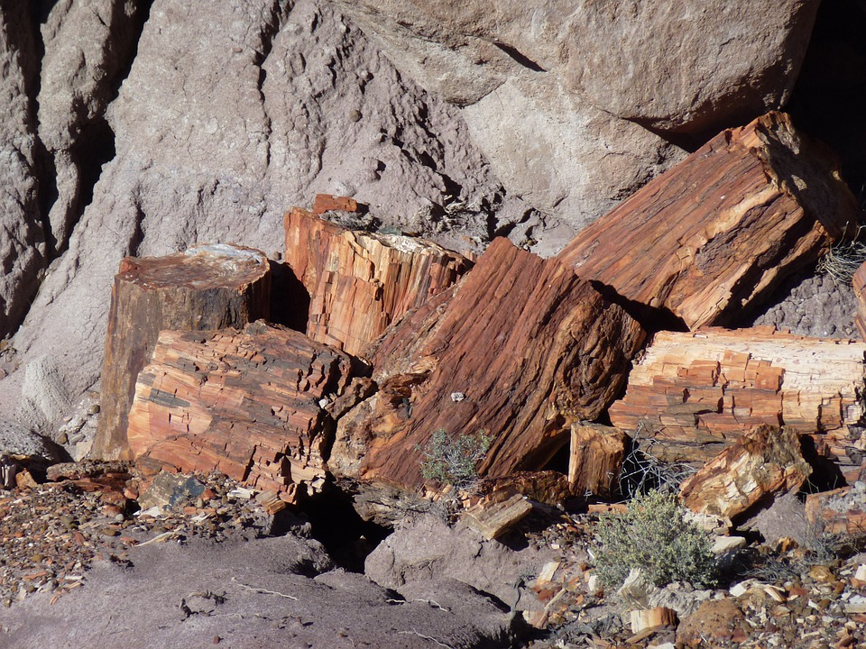 Petrified Forest, Fossils, Trees, Wood, Dead Wood