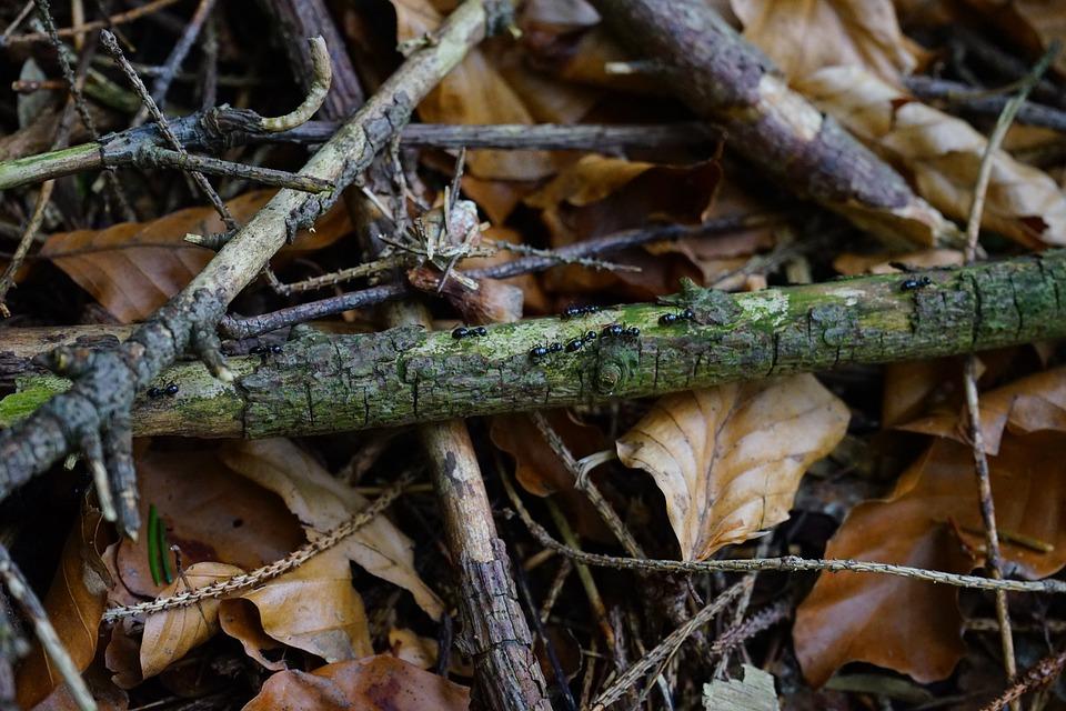 Ant Street, Dead Wood, Leaves, Aesthetic