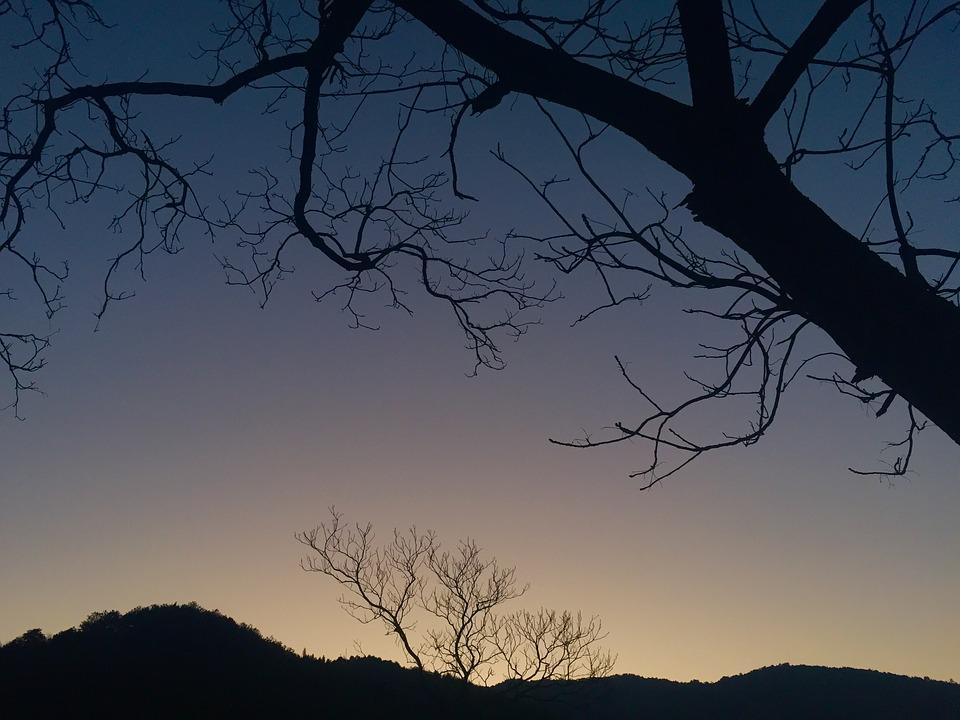 Twilight, The Old Tree, Deadwood, Silhouette