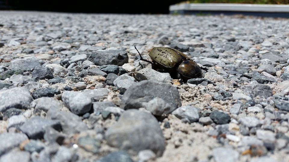 Beetle, Rocks, Death, Wings, Horn, Stag, Shell, Nature