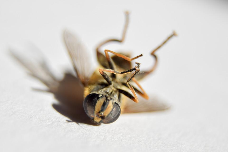 Wasp, Insect, Death