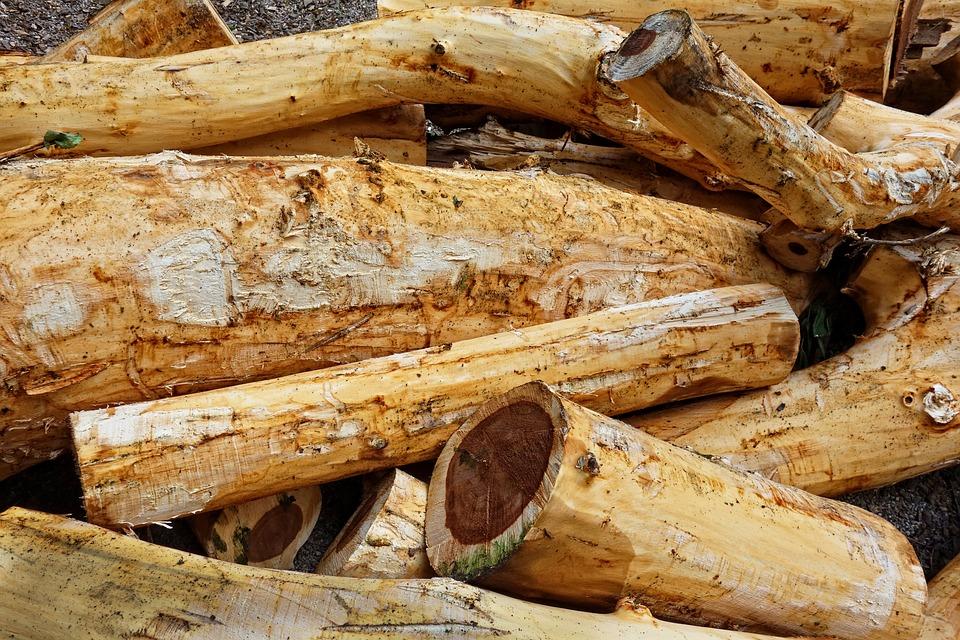 Wood, Log, Debarked, Debarked Logs, Lumber, Trunk, Cut