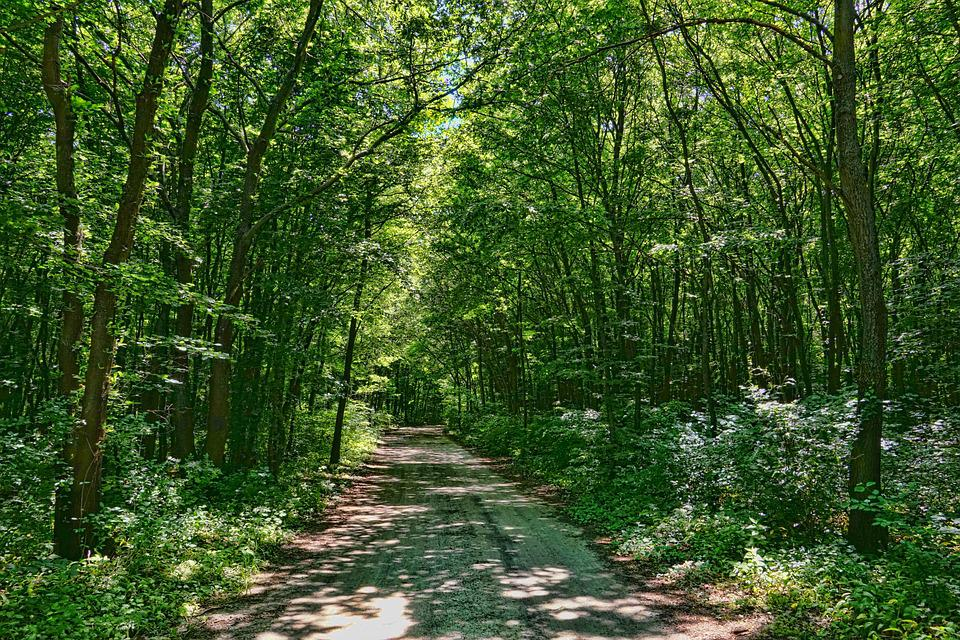 Deciduous Forest, Forest Path, Spring Forest, Green