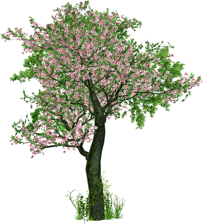 Tree, Deciduous Tree, Flowers, Grass, Digital Art
