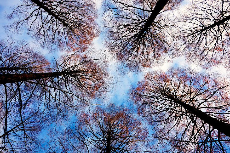 Tree Tops, Trees, Branches, Bare Trees, Deciduous Trees
