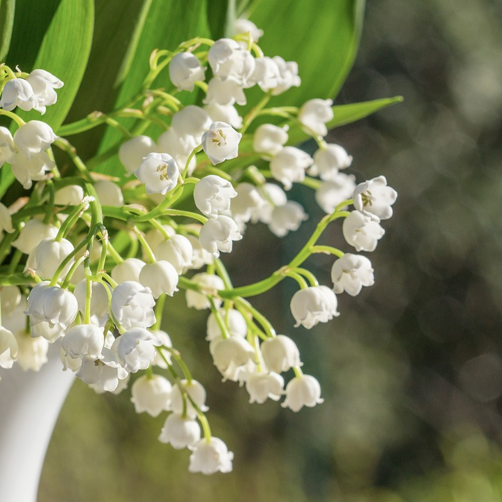 Lily Of The Valley, Vase, Bouquet, Flowers, White, Deco