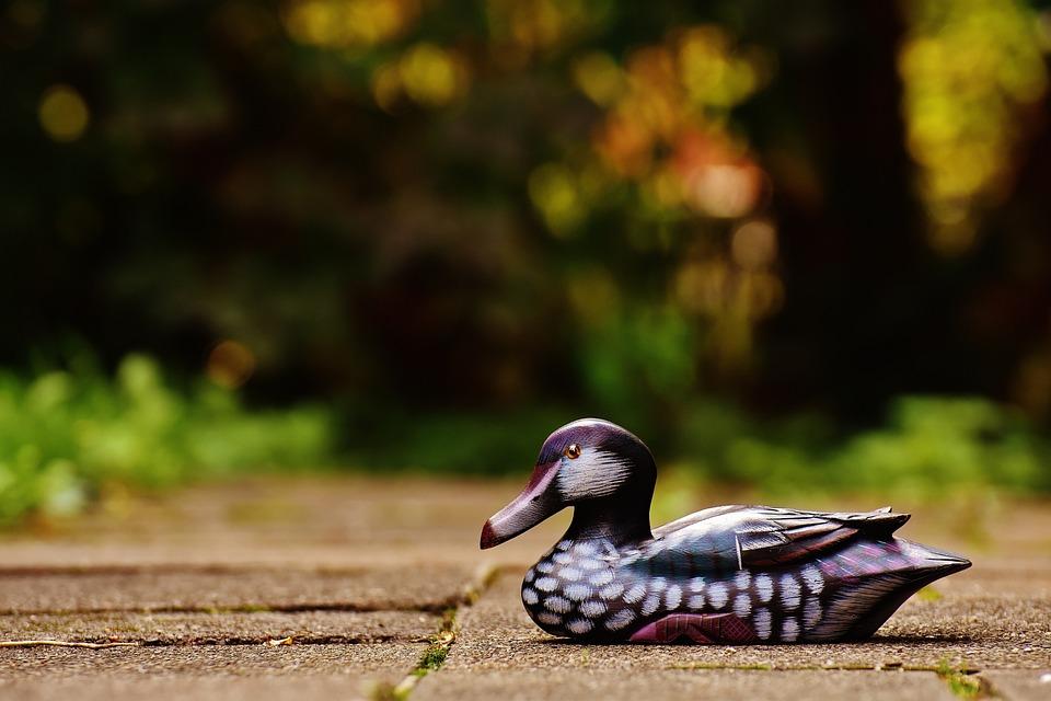 Duck, Deco, Fig, Cute, Sweet, Wood, Animal, Colorful
