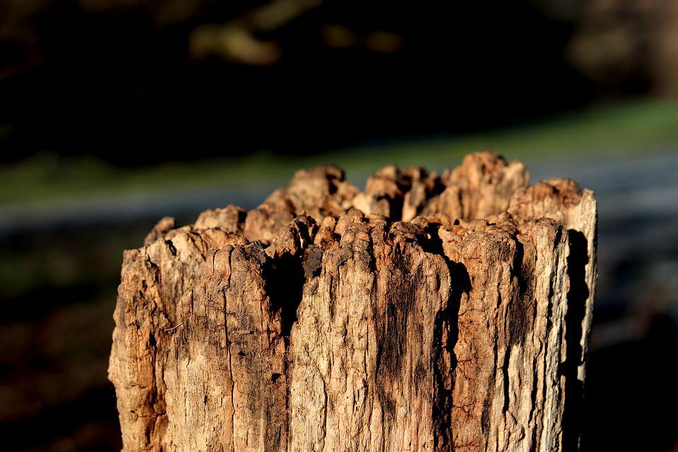 Picket, Old, Wood, Erosion, Decomposition, Closing
