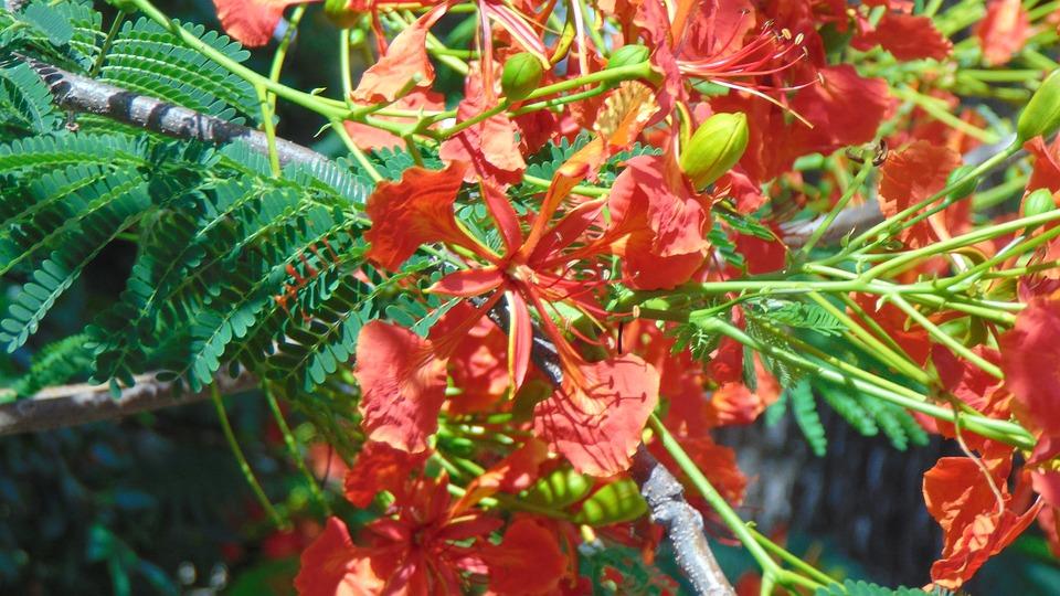 Flores, Verde, Naturaleza, Gratis, Rosa, Decoracion