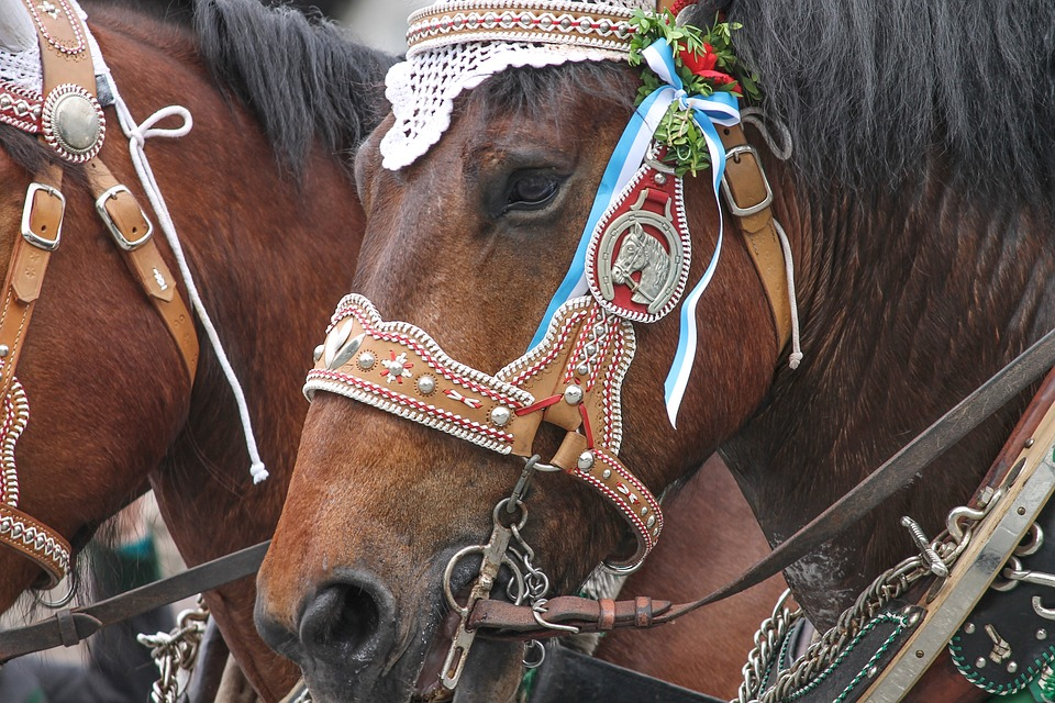 Harness For Horses, Horse Jewelry, Decorated, Horses