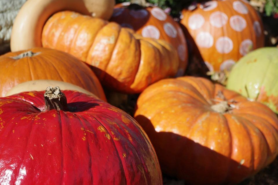 Pumpkin, Halloween, Decoration, Fall, Harvest, Autumn