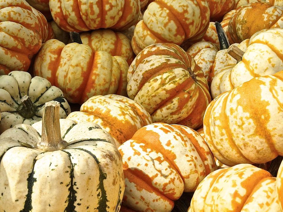 Pumpkin, Gourd, Decoration, Structure, Autumn Motives