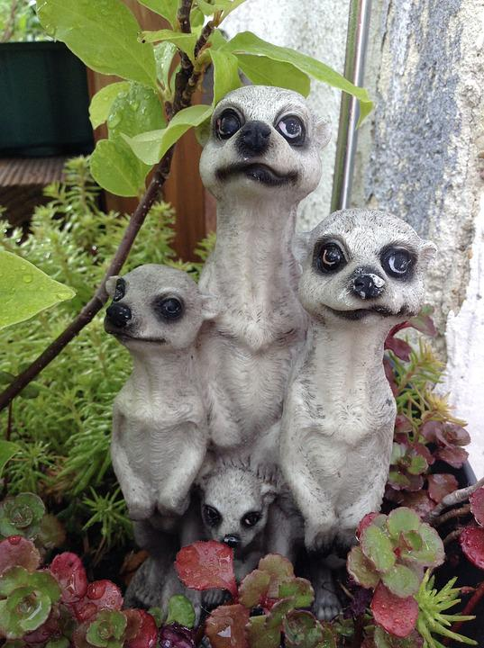 Meerkat, Garden, Figure, Garden Figurines, Decoration