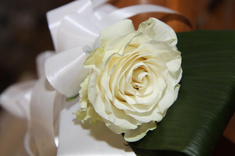 Flower, Bow, Decoration