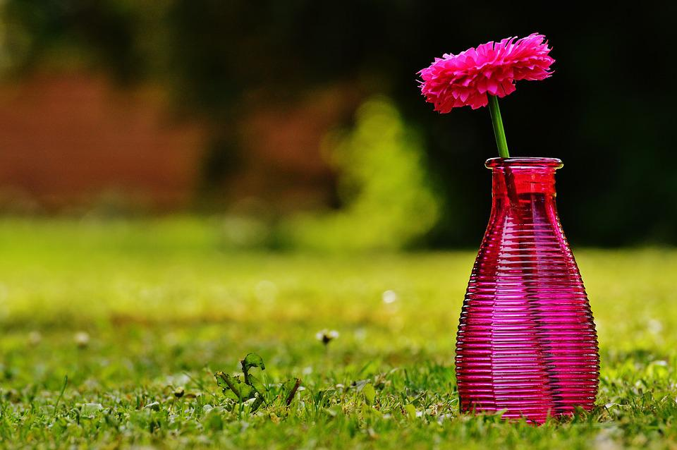 Vase, Glass, Flower, Decoration, Pink, Transparent