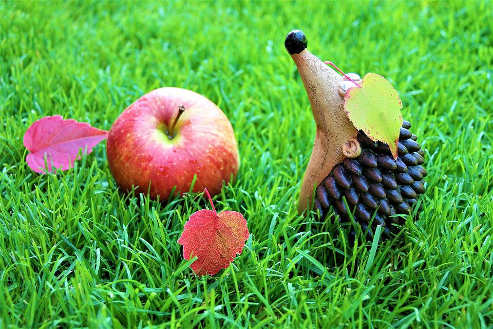 Autumn Weather, Optimistic, Decoration, Fruit, Grass
