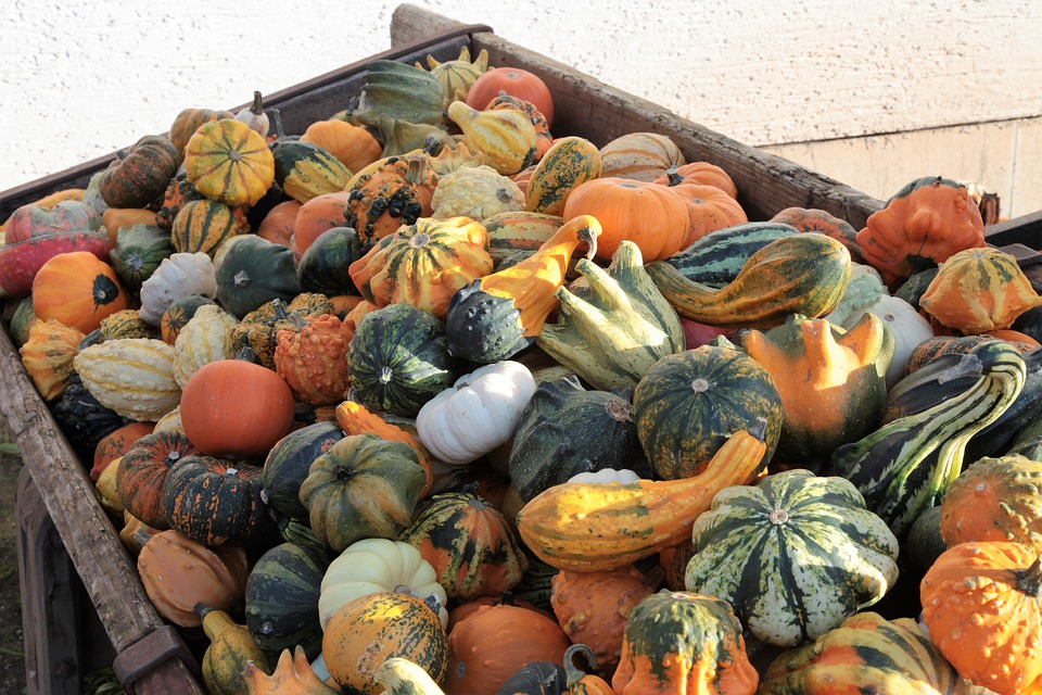 Pumpkin, Gourd, Decoration, Autumn, Halloween