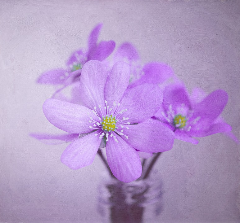 Image, Painting, Flowers, Hepatica, Deco, Decoration
