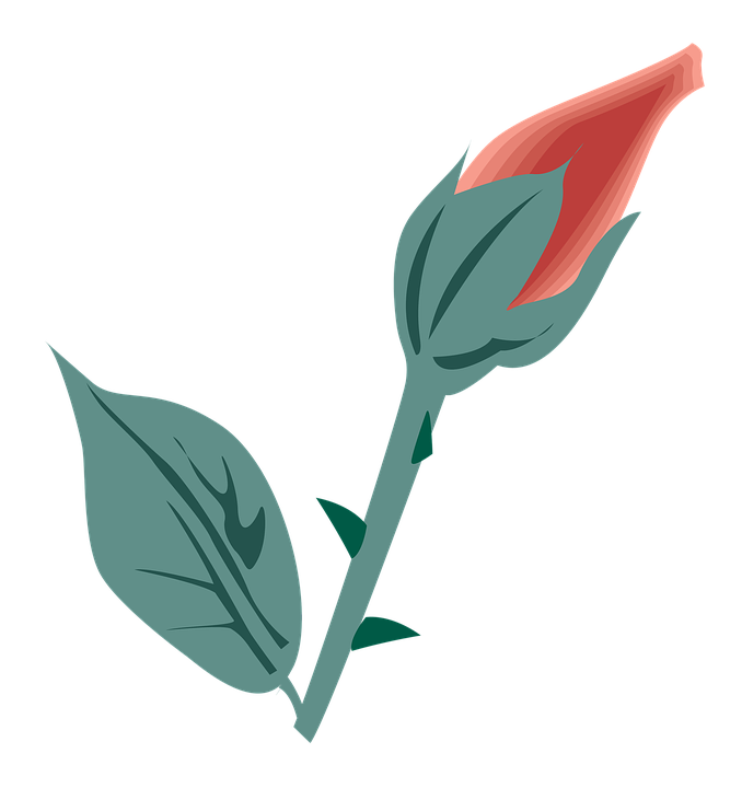 Flower, Symbol, Icon, Design, Flat, Decoration, Nature
