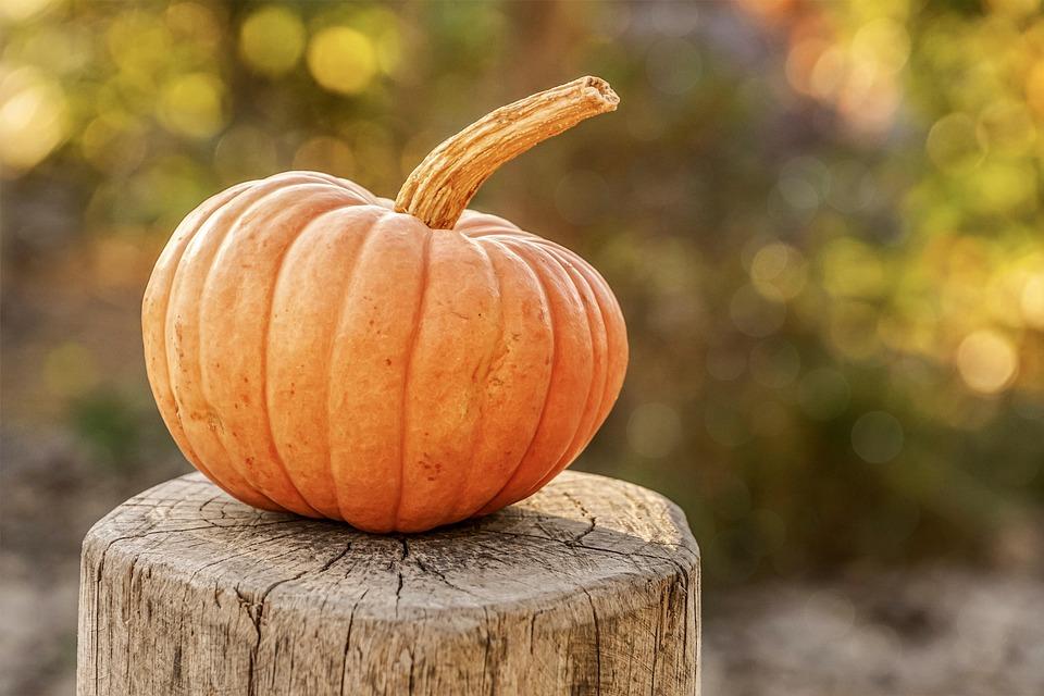 Pumpkin, Autumn, Decoration, Orange, Food