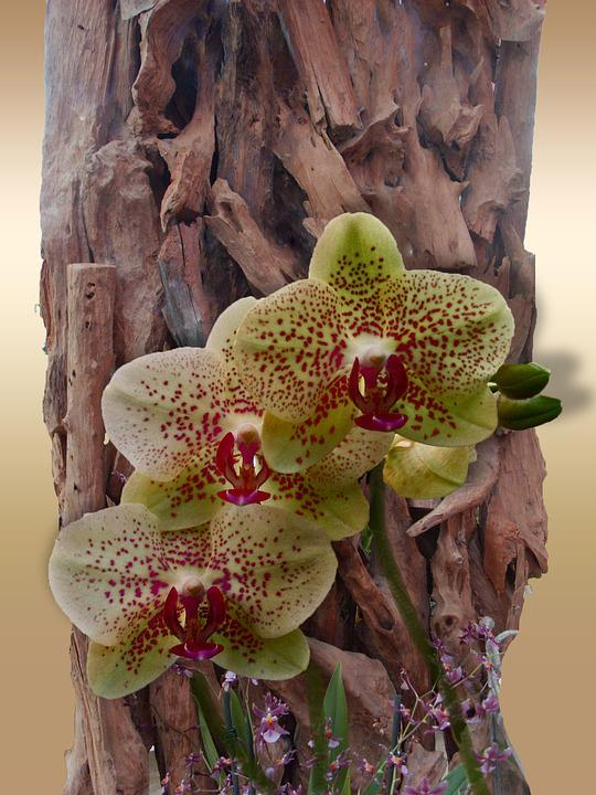 Flower, Orchid, Decoration, Blossom, Bloom, Wood