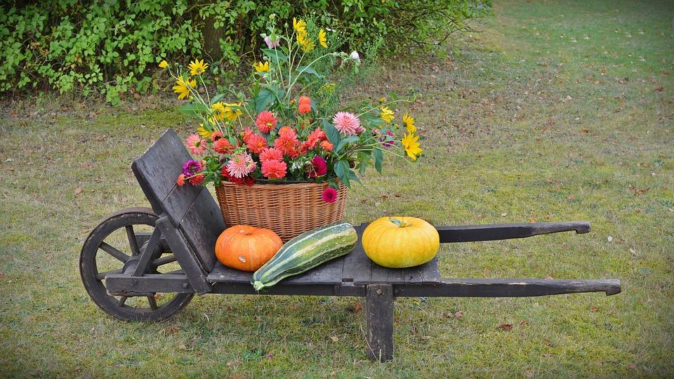 Thanksgiving, Decoration, Harvest Festival, Pumpkin