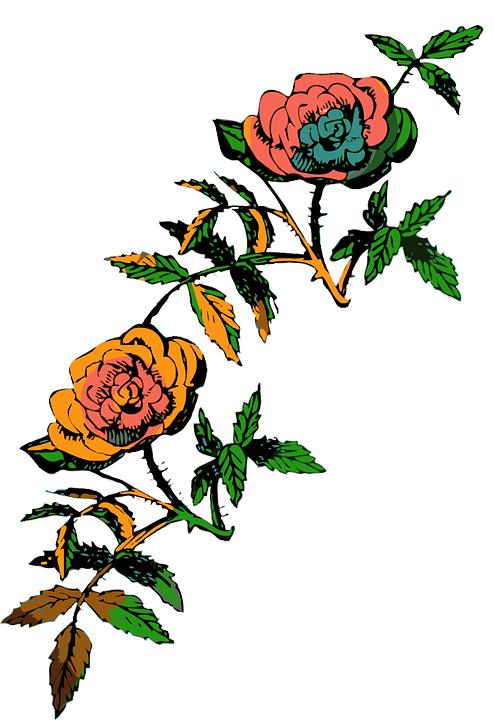 Flower, Rose, Decoration